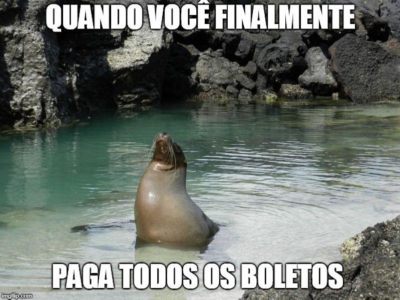 """Em um lago, uma foca está no centro da imagem com o focinho para cima. Ao fundo há pedreiras. Está escrito em texto branco """"Quando você finalmente"""", na parte de cima da imagem, e """"Paga todos os boletos"""" na parte de baixo."""